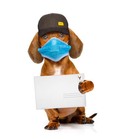 dachshund sausage dog delivering a big envelope as a postman with cap, in covid 19, cornavirus, virus time Banco de Imagens