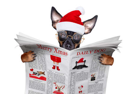 christmas prague ratter, prager rattler santa claus dog reading a newspaper or magazine, isolated on white background, as a surprise