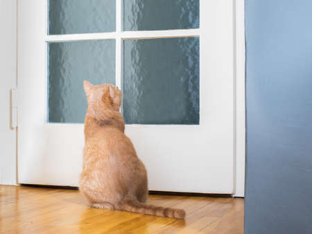 cat kitten waiting at the door for owner for a walk or having a meal to eat