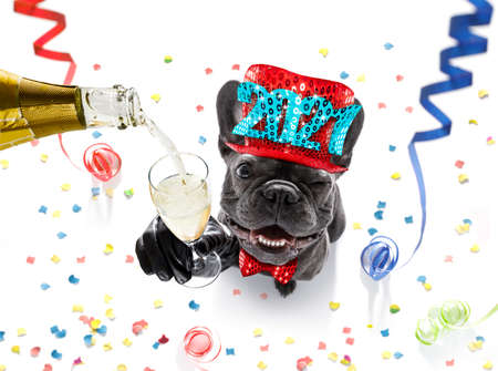 french bulldog dog celebrating new years eve with owner and champagne glass isolated on serpentine streamers and confetti Imagens