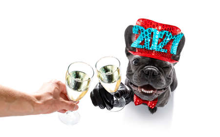 dog celebrating new years eve with champagne isolated on white background beside a banner or placard, peace and victory fingers