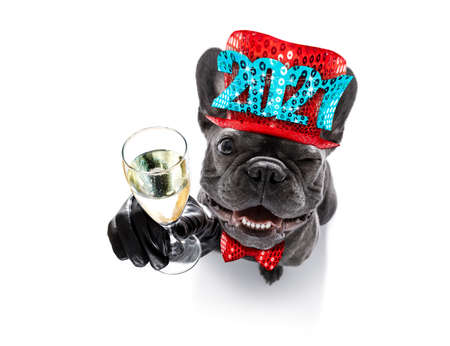 french bulldog dog celebrating new years eve with owner and champagne glass isolated on white background, wide angle view