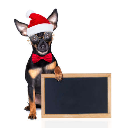 prague ratter santa claus dog with a big gift or present, for christmas, isolated on white background behind banner, placard or blackboard Banque d'images