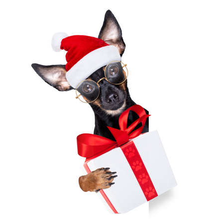 prague ratter santa claus dog with a big gift or present, for christmas, isolated on white background
