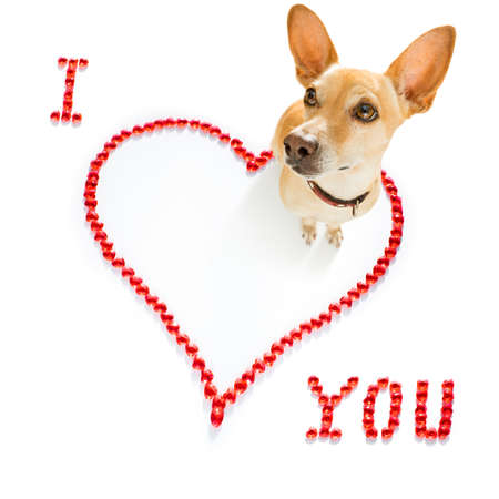 chihuahua dog on valentines love heart shape with I love you sign as background isolated on white