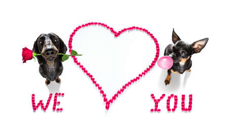 group row team of dogs on valentines love heart shape with I love you sign as background isolated on white