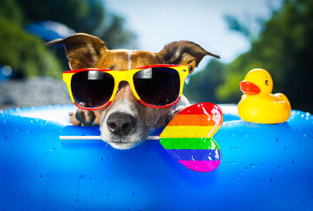 jack russell dog on blue air mattress in gay pride in summer vacation at the beach or river in water refreshing rainbow candy stick or lollipop Stock fotó