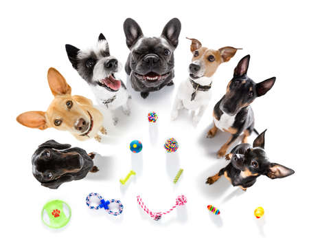 team group row of dogs with toys waiting to play isolated on white background