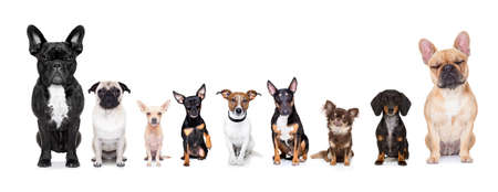 team group row of dogs taking a selfie isolated on white background, smile and happy snapshot Imagens