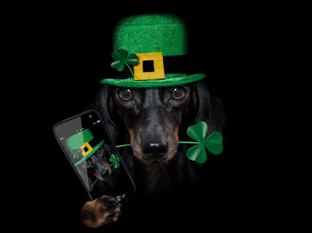 st patricks day dachshund sausage dog with lucky clover isolated on black dark dramtic background, taking selfie