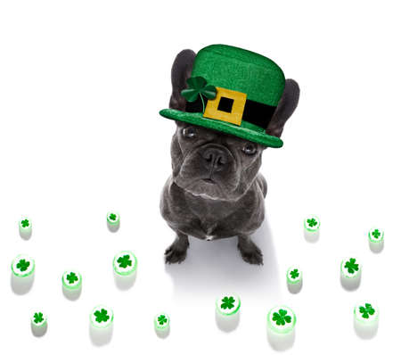 st patricks day french bulldog dog with lucky clover isolated on black dark dramtic background Banque d'images