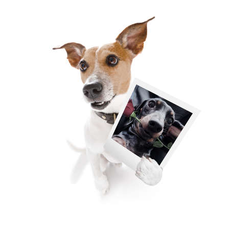 super funny jack russell dog holding a photograph with old retro style look isolated on white background