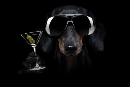 french bulldog dog in dark black isolated background, with martini cocktail drink celebrating and toasting, looking cool