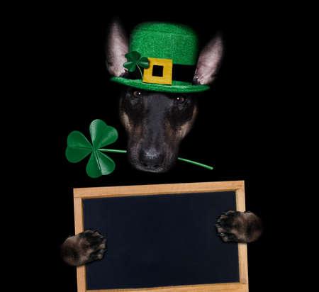 st patricks day bull terrier dog with lucky clover isolated on black dark dramtic background, holding blackboard banner poster 스톡 콘텐츠
