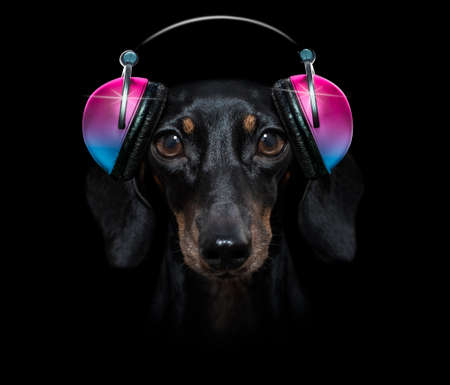 cool dj sausage dachshund dog listening or singing to music with headphones and mp3 player isolated on black dramatic dark background Banque d'images