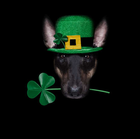 st patricks day dog with lucky clover isolated on black dark dramtic background, taking selfie
