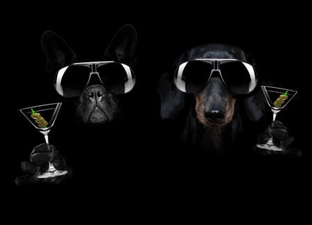 french bulldog and dachshund dog in dark black isolated background, with martini cocktail drink celebrating and toasting, looking cool 스톡 콘텐츠