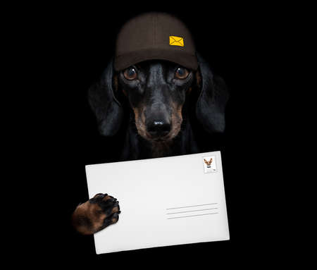 dachshund sausage dog delivering a big yellow package as a postman with cap, isolated on black dark dramatic background Banque d'images