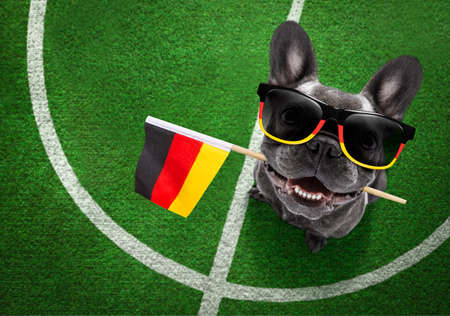 soccer french bulldog dog playing with leather ball, on football grass field with german, germany flag