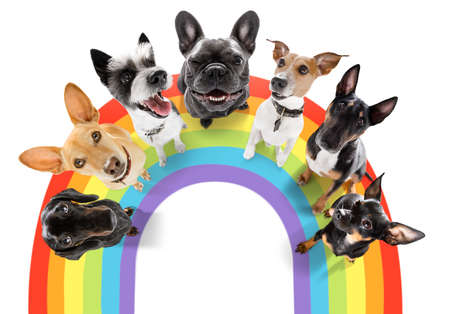 fairy funny gay row couple of dogs proud of human rights, with lgbt rainbow flag, isolated on white background