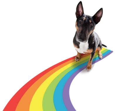 fairy funny gay dog proud of human rights waving with lgbt rainbow flag, isolated on white background