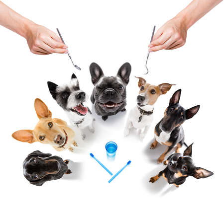 couple of dogs as group and in a row at the dentist with toothbrush