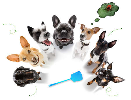 team group couple of dogs full of ticks and fleas, isolated on white background Banque d'images