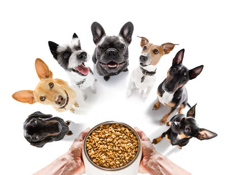 row of dogs as a group or team, all hungry in front of food bowl, isolated on white background