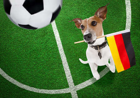 soccer jack russell terrier dog playing with leather ball, on football grass field Banque d'images