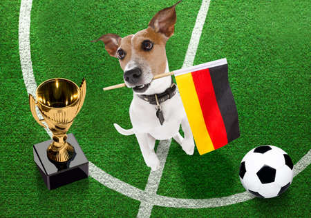 soccer jack russell terrier dog playing with leather ball, on football grass field and win a trophy Banque d'images