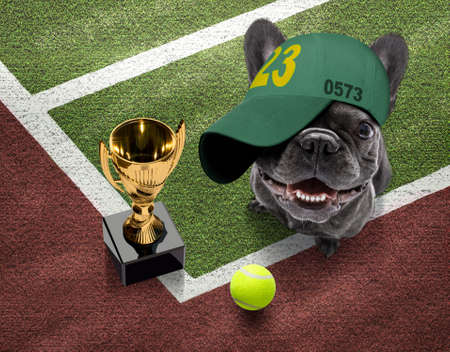 player sporty french bulldog dog on tennis field court with balls, ready for a play or game and win a trophy