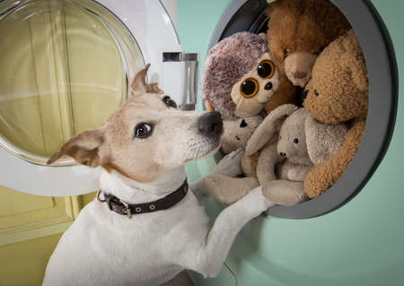 dog at a washing machine ready to do the chores and homework or housework and clean the dirty teddy bears Banque d'images