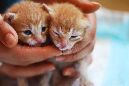 animalitos tiernos: Gatitos Sleepy Foto de archivo
