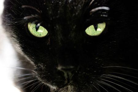 Black cat and beautiful eyes photo