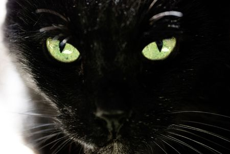 Black cat and beautiful eyes Standard-Bild