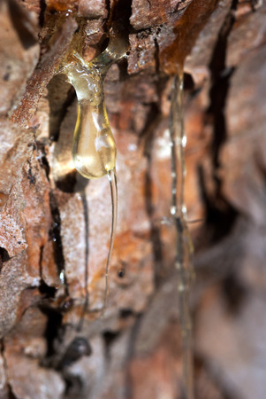 resin: Twi trickles of resin pouring down a tree