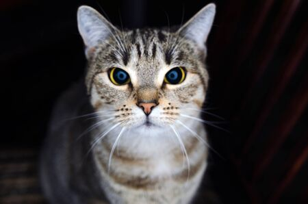 A close-up of a cat looking straight into the camera Stock Photo