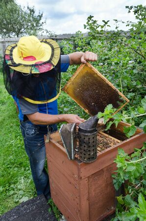 An apiarist taking out a honey frame out of a beehive photo