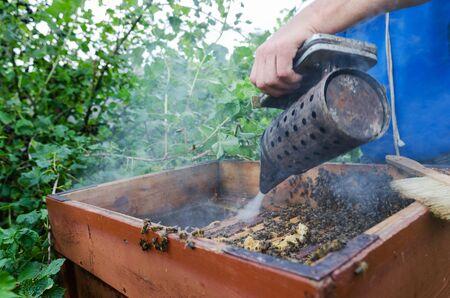 An apiarist spraying smoke into a beehive photo