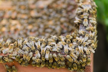 A swarm of bees seen from the above