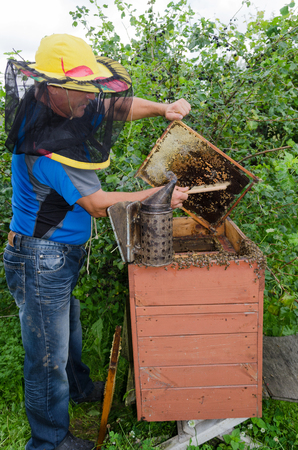 apiarist: An apiarist taking out a honey frame out of a beehive