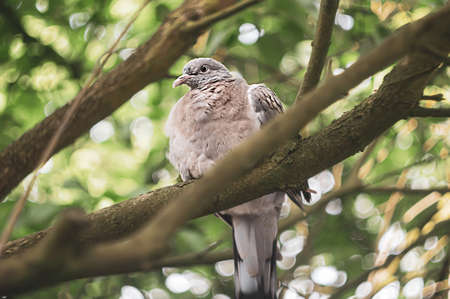 Pigeon on a tree branch among green leaves