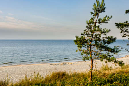 sandy beach in Krynica Morska by the Baltic Sea, trees, a clear day