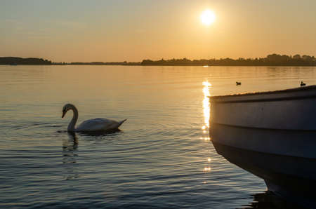 Masurian lake, boat. The swan is swimming on the lake during sunset