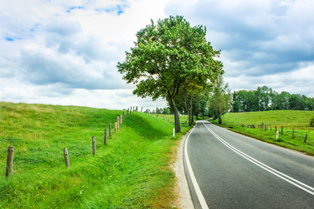 road shoulder: Curvy road with trees and meadow with fence on the side Stock Photo