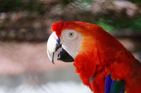 Macro portrait of a parrot`s head