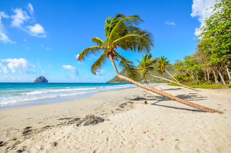 Caribbean Martinique beach and coconut tree Banque d'images