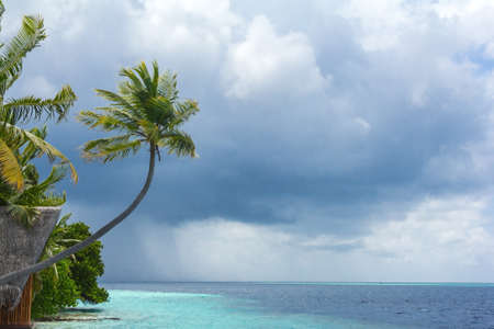 Palm tree against a stormy sky background in the Maldives