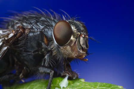 wet flies: close-up portrait of a fly Stock Photo