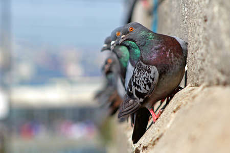 Pigeons on Mosque in Istanbul, Turkey.